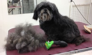 small dog Breed Prices Dog Grooming Adelaide